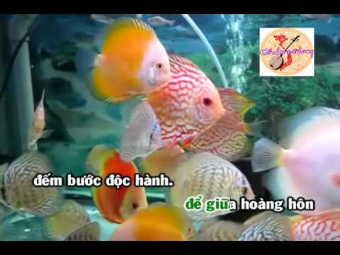 Karaoke: Liêu Giang