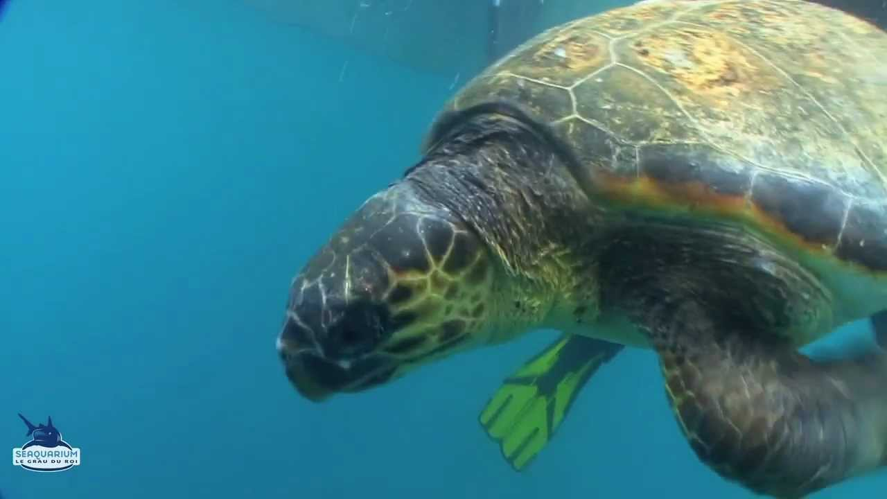 Les tortues regagnent la mer youtube - Images tortue ...