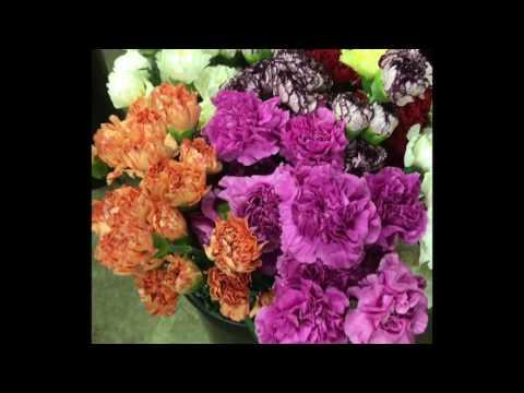 Processing Fresh Flowers at Petersen & Tietz Flower Shop