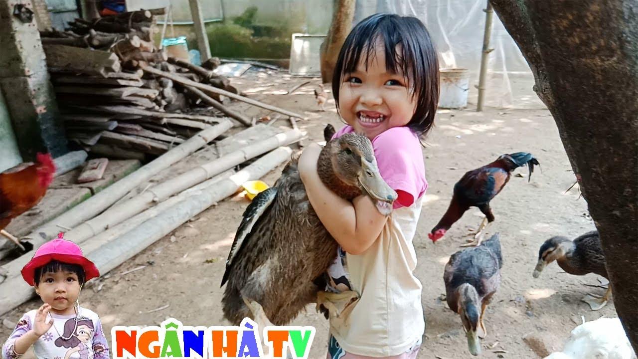 Đàn gà đòi ăn bé cho vịt ăn cám chơi bắt vịt tóm đuôi gà ❤Ngân hà TV❤