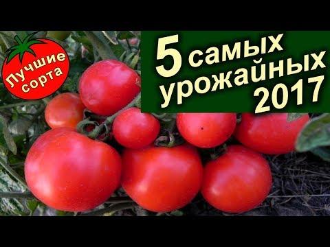 Самые Урожайные Семена Томатов 2017 (лучшие сорта томатов). | урожайных | урожайные | томатов | томаты | семена | лучшие | сорта | самые | тома