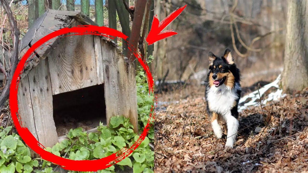Собака подбежала к будке и начала громко лаять. Когда хозяйка заглянула внутрь, потеряла дар речи