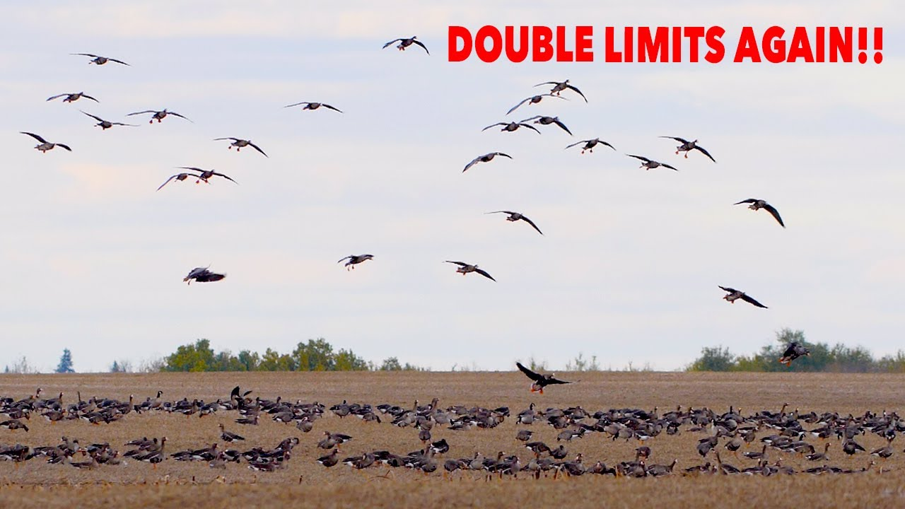 Download DOUBLE LIMITS AGAIN ... Claudio Ongaro's Hired to Hunt Season 5 Episode 6: Limits at Ongaro's