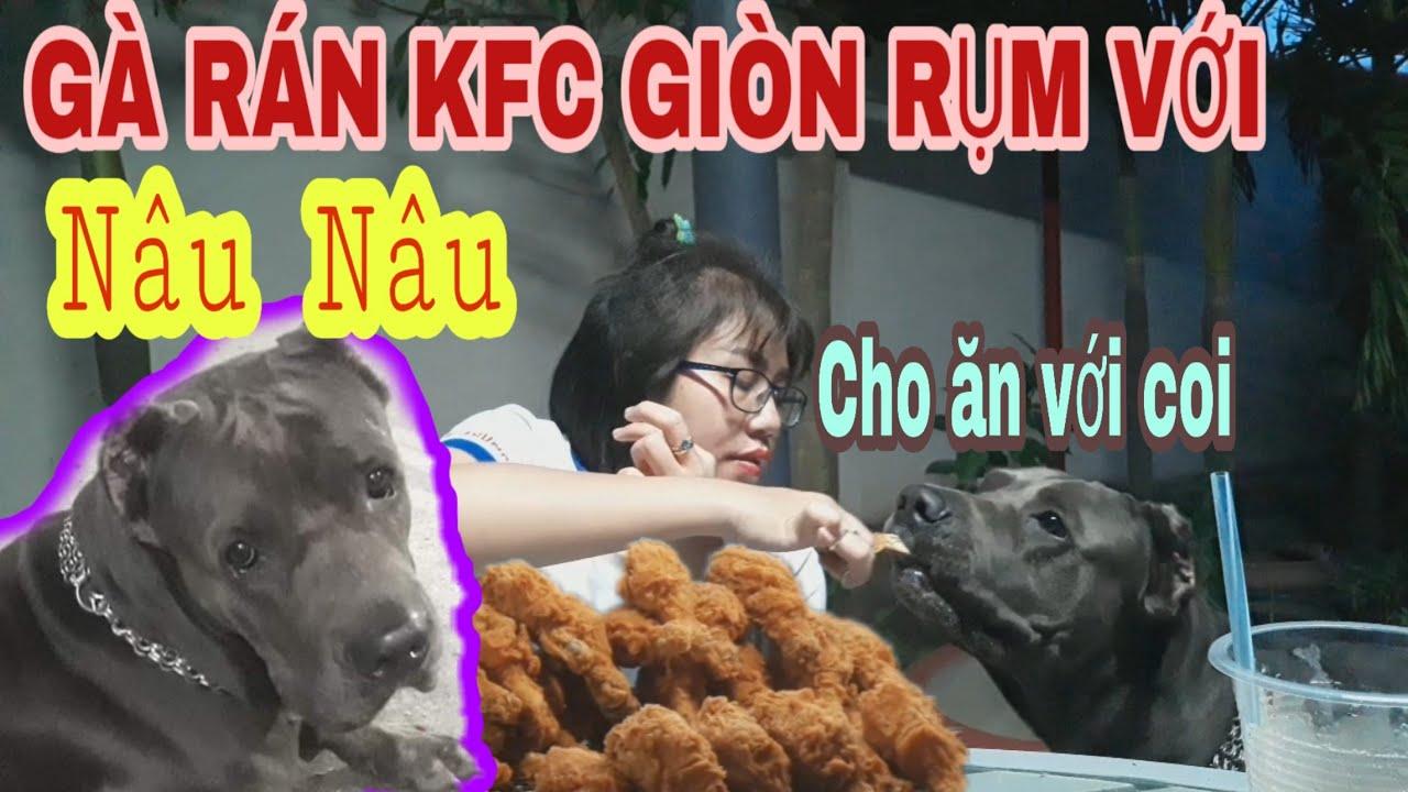 Ăn Phomai que xúc xích và Gà rán KFC giòn rụm với chó Ngao Ý Nâu Nâu  Trâm Mốc