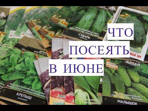 Как вы относитесь к посеву семян на рассаду в «улитки