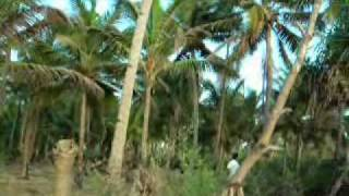 Goa beach property at Velsao 103.wmv