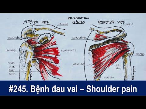 #245. Bệnh đau vai và tổn thương cơ quay khớp vai - Shoulder pain and rotator cuff injury