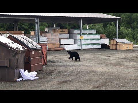 beaer steals trashcan