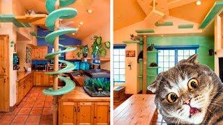 видео Кошачья пирамида для кошек