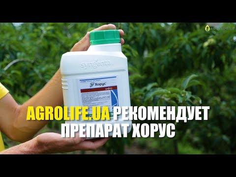 Хорус- Эффективная борьба с заболеваниями растений | Agrolife.ua рекомендует