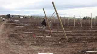 Planting A Modern Orchard