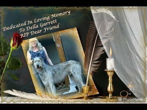 3-25-2018 Ft Worth Kennel Club Irish Wolfhounds