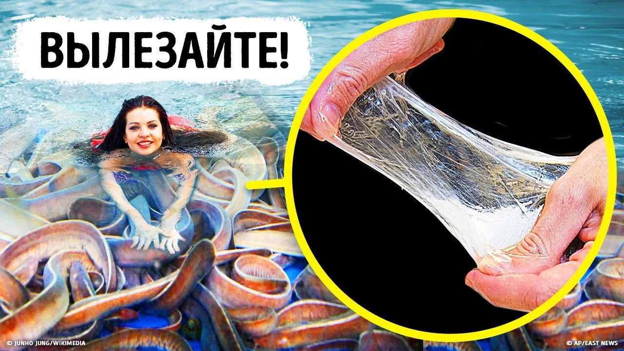 Даже акулы боятся этой скользкой рыбы, и вам стоит последовать их примеру!