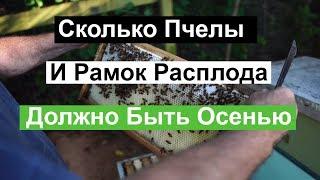 Пасека #95 Сколько Пчелы и Рамок Расплода,Должно Быть Осенью Пчеловодство для начинающих