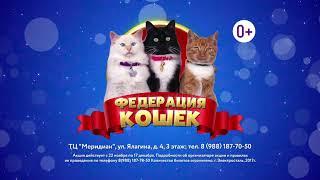 Выставка Федерация кошек