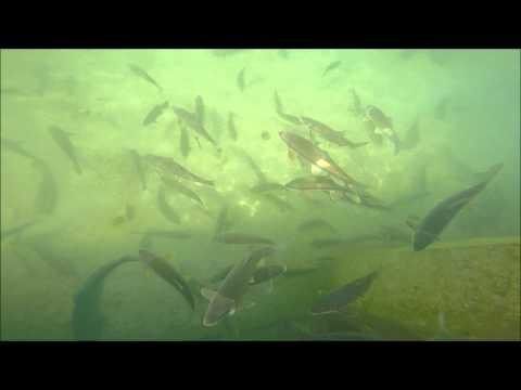 Elk Rapids Dam GoPro