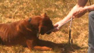Dog-father Overview.wmv