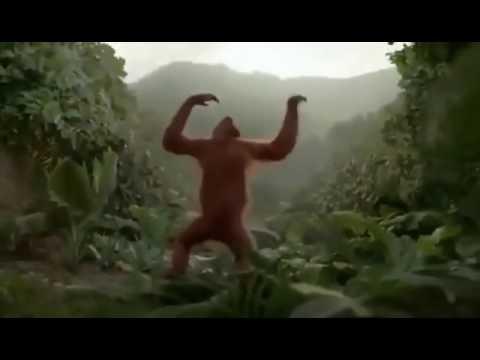 Прикол обезьяна танцует