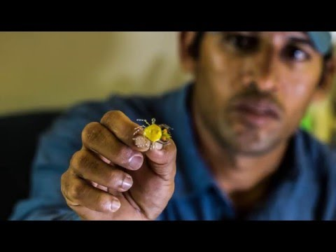 How To Tie The MoFo Crab Tied By Alphonse Fishing Co Guide Yousuf Shaikh