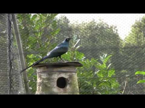 vogelpark ruinen deel 3 - youtube