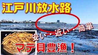 江戸川放水路河口(千葉県市川市本行徳)で無料の潮干狩りをしてきまし...