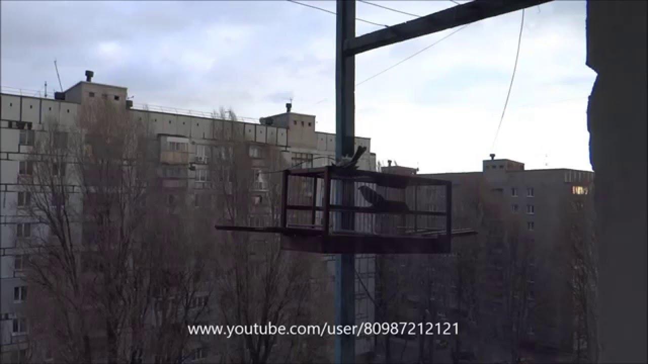 Ловля птиц на сеть паутинку#1 - YouTube