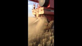 Video Straw and Chaff Lining download MP3, 3GP, MP4, WEBM, AVI, FLV November 2017