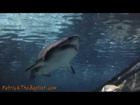 Family Trip to Ripley's Aquarium Knoxville TN