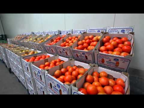 SV0215TH Tomato Chapter 4 - Market agent and retail feedback