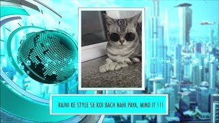 9XM Newsic | Check out the coolest Cat in the town