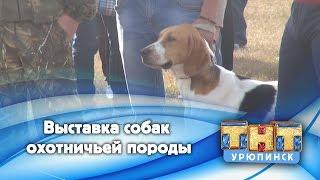 Выставка собак охотничьей породы