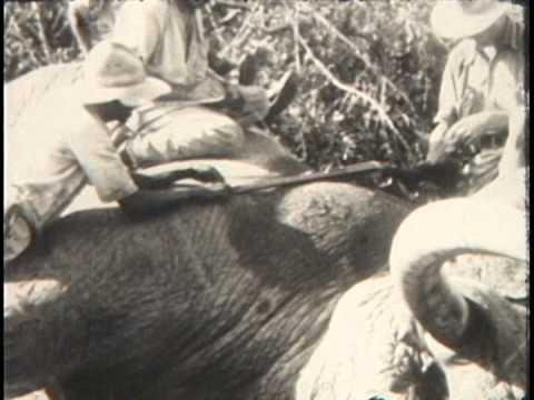 """JC """"Kid"""" Nichols African Safari 1929-1930 Incredible Adventure"""
