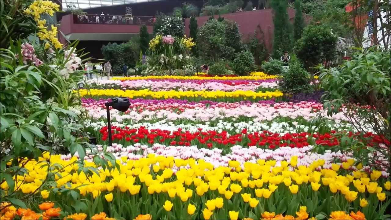 郁金香花卉展 - 新加坡濱海灣花園 2013 - YouTube