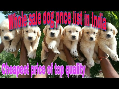 Whole sale dog price list in  India,2018(cheap to top quality)