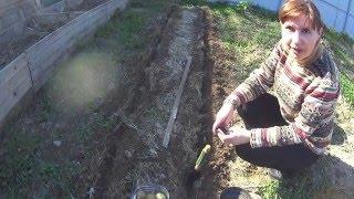 ПОСАДКА КАРТОФЕЛЯ ВНИЗ РОСТКАМИ!(ДАТА СЪЕМКИ 02.05.2016 г.МОСКОВСКАЯ ОБЛАСТЬ)) В этом видео я покажу посадку картофеля вниз ростками..., 2016-05-05T06:09:45.000Z)