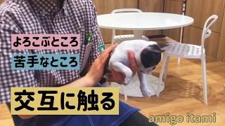 犬猫生体監修 連れて帰ってからの触れ合い方 thumbnail