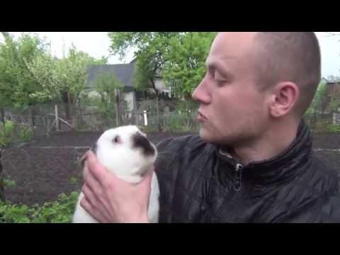 Видео: К чему приводит использование некачественных вакцин от миксоматоза кроликов