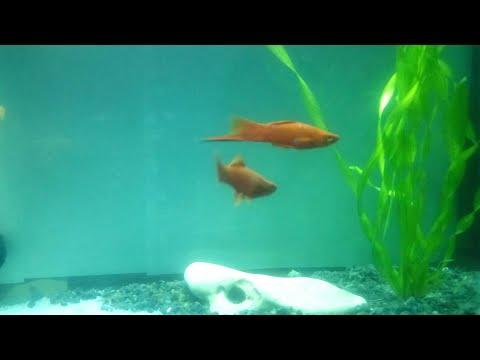 #Манка. #Лечим рыбок от манки. #Способы лечения.