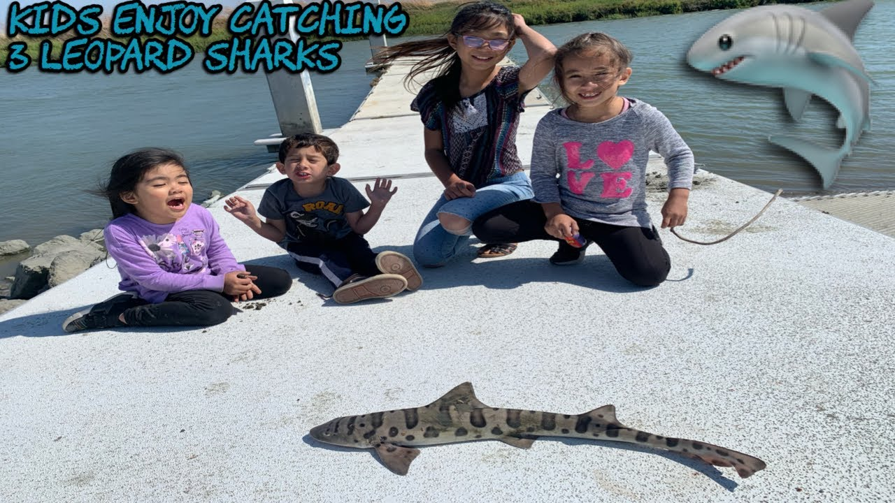 how to catch leopard shark