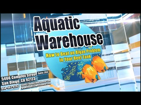 Algae Problems in Reef Aquariums - YouTube