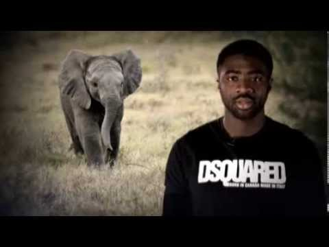 Premier League stars make video plea to #EndWildlifeCrime