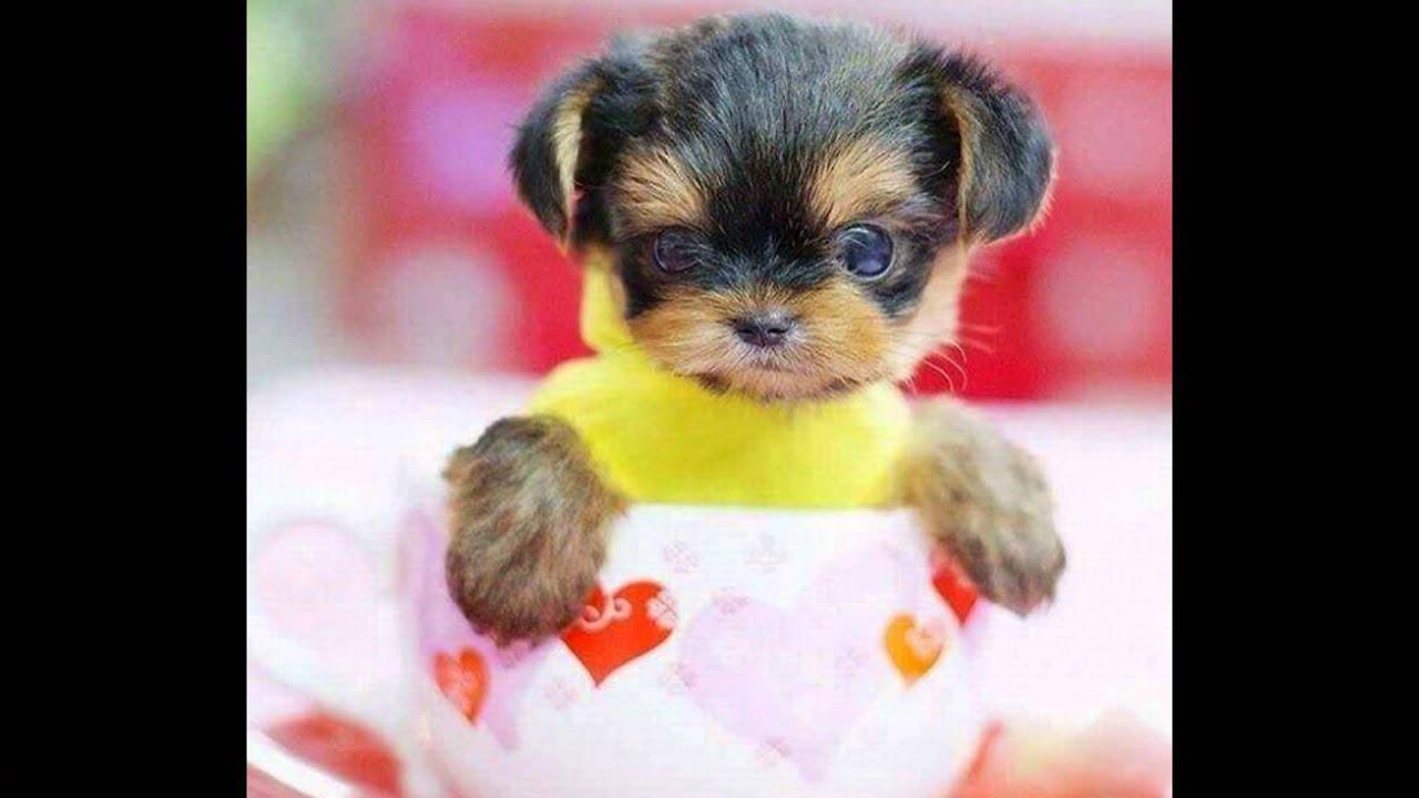 Los perritos mas lindos del mundo youtube for Fotos de los cuartos mas bonitos del mundo