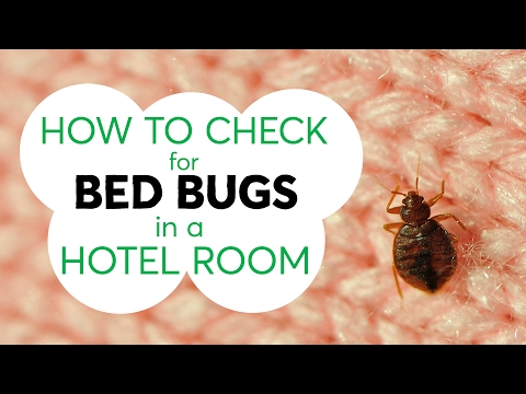 Three Tips to Help You Avoid Hitchhiking Bed Bugs From a Hotel Room