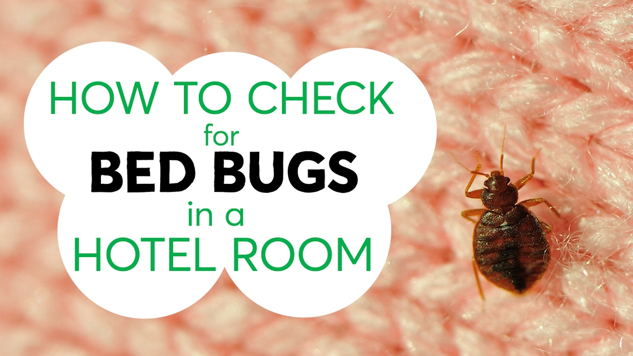 How Do I Check For Bed Bugs In A Hotel