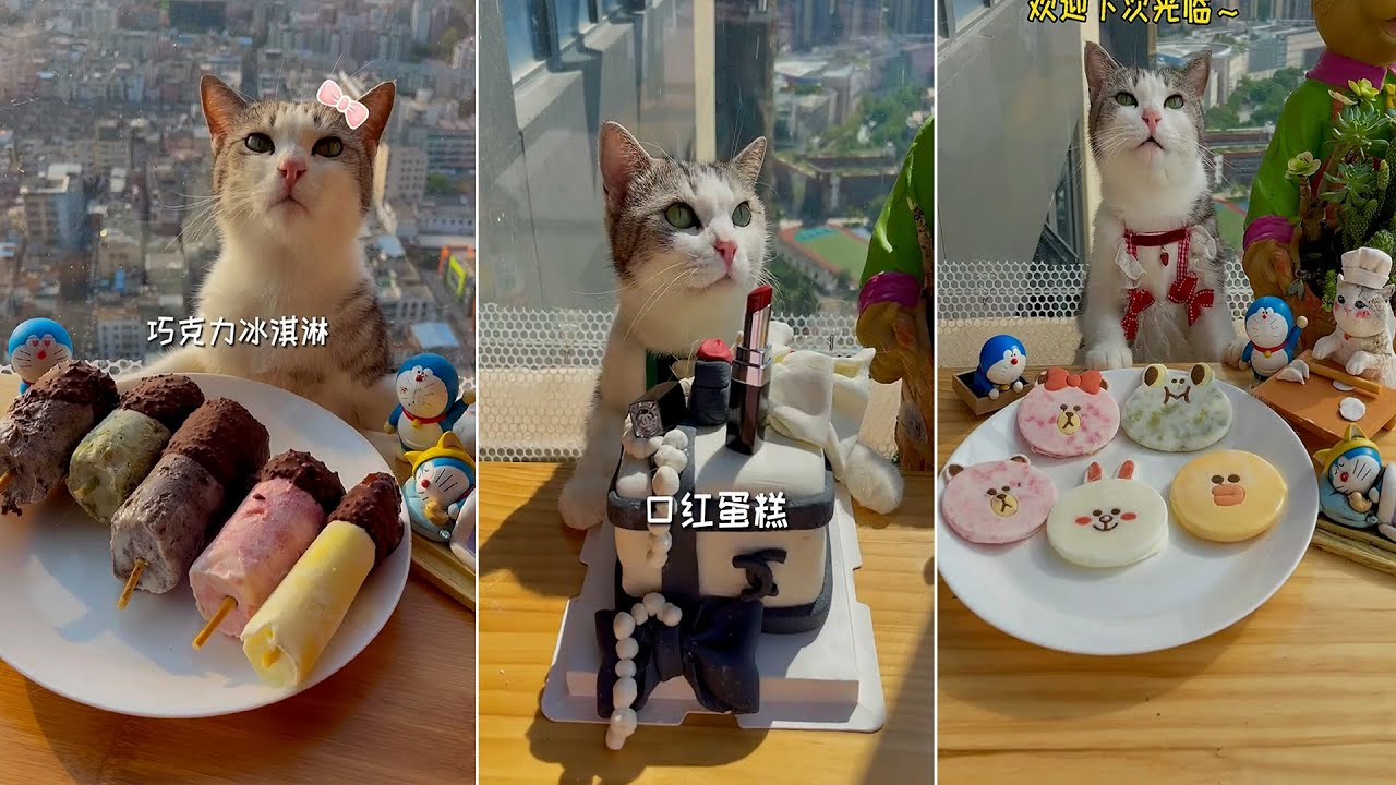 Download Cute and Funny Cat Videos Compilation 😍🐶   Cats Are Not Only Animals But Also Friends - Part  52
