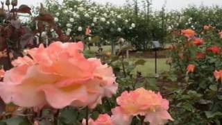 My Choice - André Rieu: Roses from the South