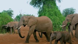 As Trump eases ban on hunting trophies, how will elephants suffer?