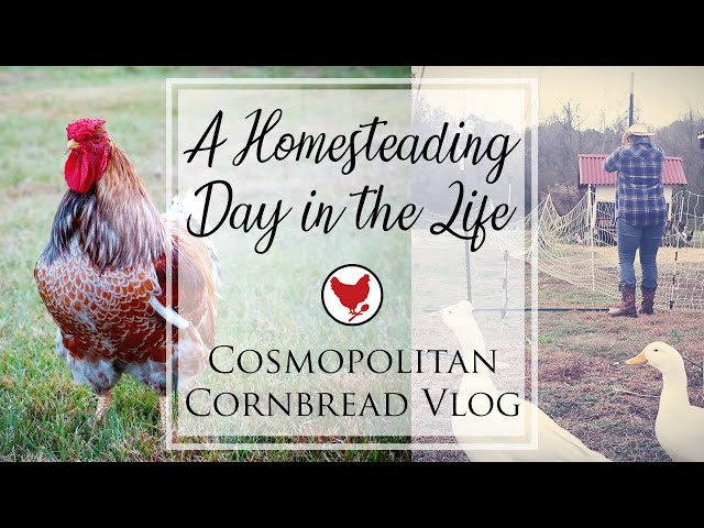 A HOMESTEADING DAY IN THE LIFE | VLOG