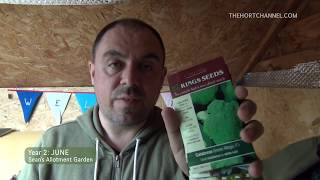 Sean's Allotment Garden Derby Lane 195: Summer tasks and thunderstorms (June)