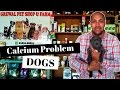 Old Age - Calcium Problem in Dogs - Bhola Shola